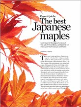 Best Japanese maples